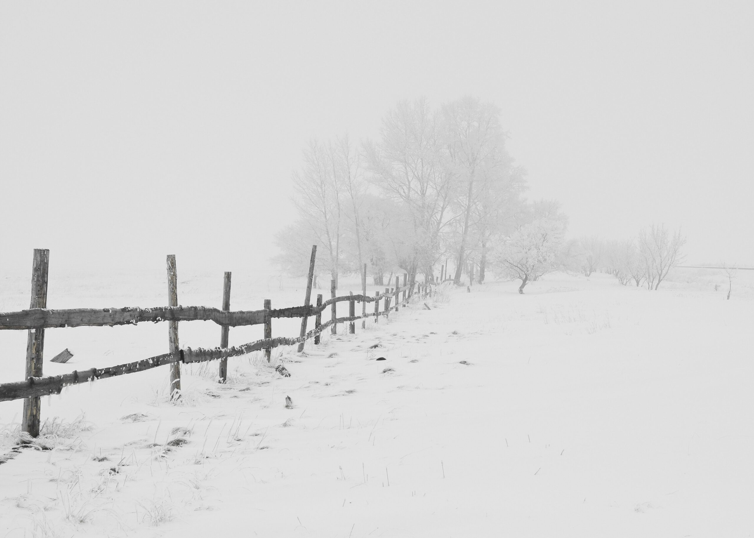 Fotograferen in de winter